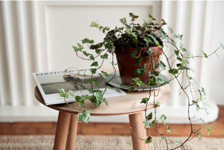 plant on a stool